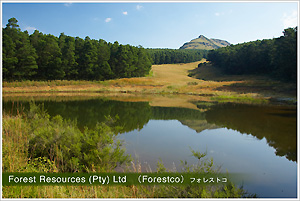 Forest Resources (Pty)Ltd  (Forestco)フォレストコ