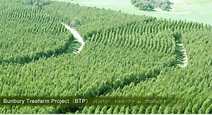 Bunbury Treefarm Project(BTP)バンバリー トゥリーファーム プロジェクト