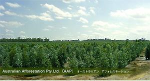 Australian Afforestation Pty.Ltd.(AAP)オーストラリアン アフォレステーション