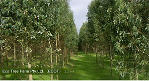 Eco Tree Farm Pty.Ltd.(ECOT)エコット