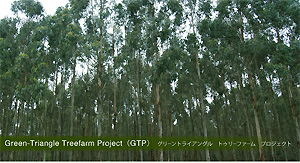Green-Triangle Treefarm Project(GTP)グリーントライアングル