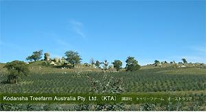 Kodansha Treefarm Australia Pty. Ltd.(KTA)講談社 トゥリーファーム オーストラリア