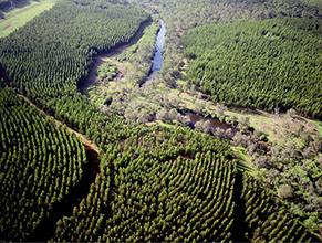 水辺林を残した植林