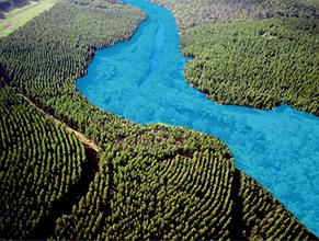 青色部が水辺林