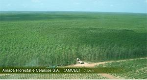 Amapa Florestal e Celulose S.A.(AMCEL)アムセル