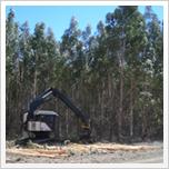 ハーベスターを使った伐採作業