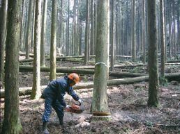 間伐作業(静岡県北山社有林)
