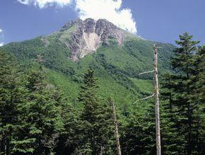 環境林分を有する菅沼社有林(日光白根山)