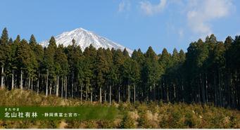 北山社有林‐静岡県富士宮市‐