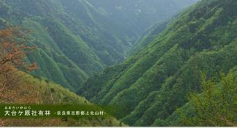 大台ケ原社有林‐奈良県吉野郡上北山村‐