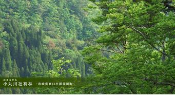 小丸川社有林‐宮崎県東臼杵郡美郷町‐