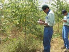 Woodland survey