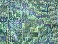 Aerial photograph of area for screening tests