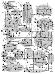 Metabolic (metabolomic) analysis of the rooting process