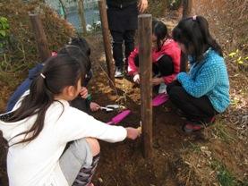 苗を植える富士第二小学校の児童たち