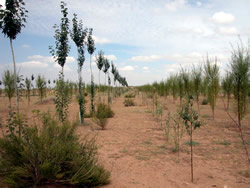 Environmental Afforestation of the Middle Stream of the Huang He, in the Ningxia Autonomous Region