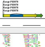 遺伝子発現解析