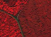衛星画像解析